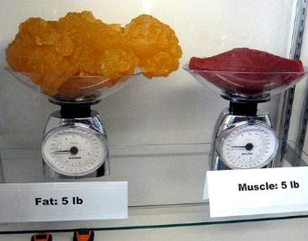 1 стакан сжигает 3 кг жира активно оказывает