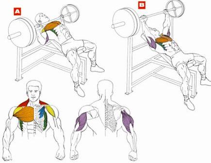 Как упражнениями увеличить грудь все группы грудных мыщц