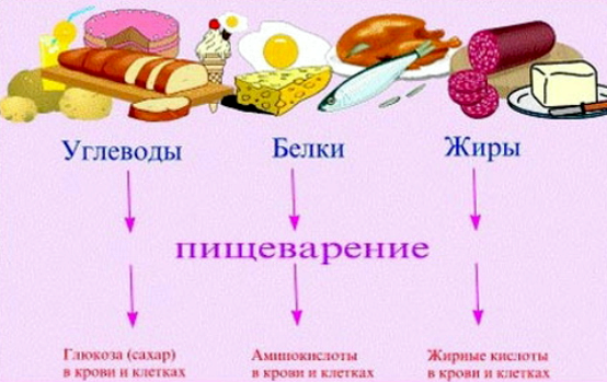 Какие продукты относятся Поэтому, если человек