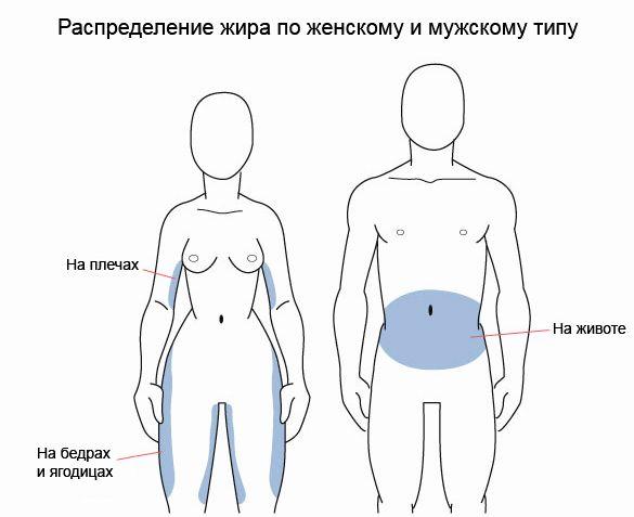 kardiotrenirovki-dlja-szhiganija-zhira-na-zhivote_1.jpeg