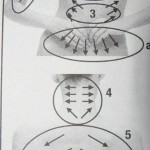 massazh-dlja-pohudenija-spiny_3.jpg