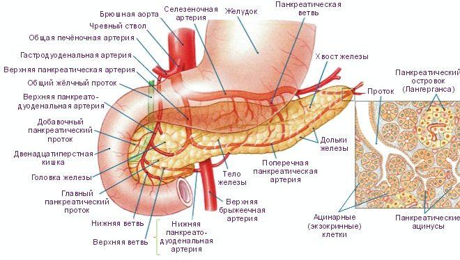 Поджелудочная железа симптомы заболевания диета Заболевания поджелудочной железы
