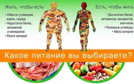 Правильное питание чтобы похудеть питание для