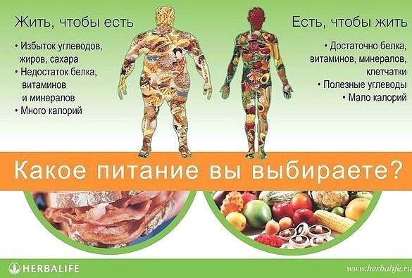 Правильное питание для здоровья организма Диетологи давно уже бьют тревогу