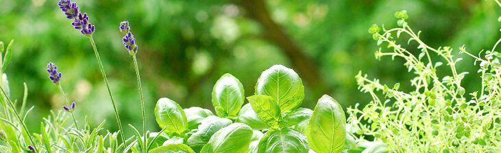 Травы для похудения сжигающие усиливающие процессы метаболизма