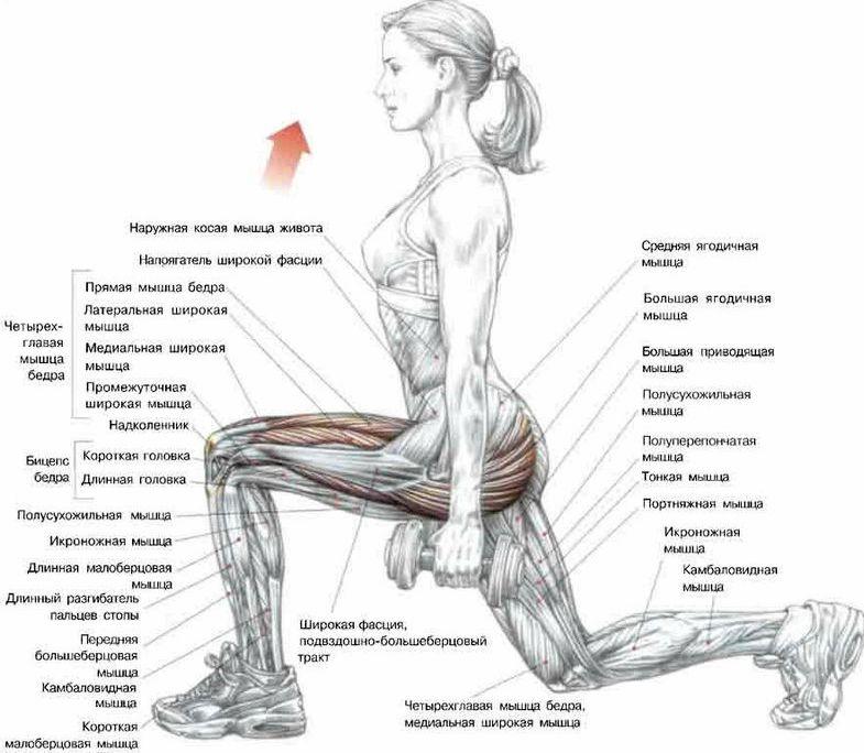 Упражнения с гантелями для ног Новичкам настоятельно