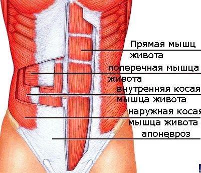 Эффективные упражнения чтобы убрать живот и бока лишний жир