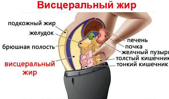 kak-szhech-visceralnyj-zhir-na-zhivote_1.jpeg