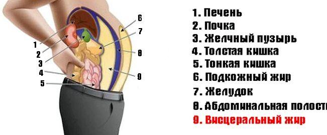 kak-ubrat-zhir-s-vnutrennih-organov_1.jpg
