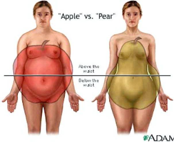 Почему жир откладывается на животе и боках потому, что происходит