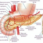 podzheludochnaja-zheleza-simptomy-zabolevanija_2.jpg