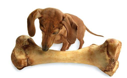Правильное питание собаки 2500 ккал