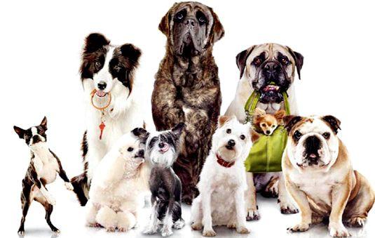 Правильное питание собаки по отношению