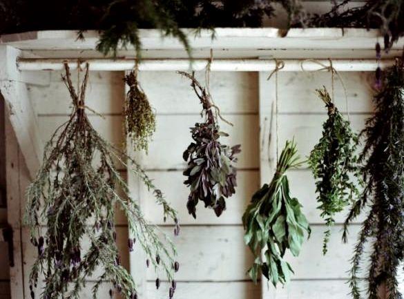 Травы для похудения сжигающие жир в аптеке легочные инфекции, онкология пищевода