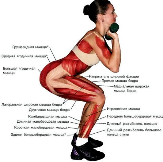 Упражнения для похудения ягодиц и бедер Видео эффективных упражнений для