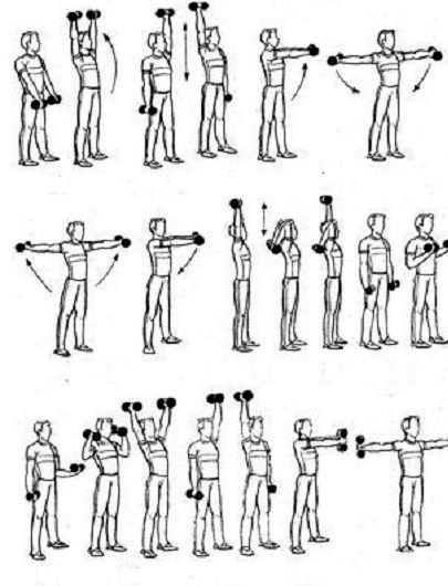 Упражнения с гантелями для женщин для рук домашних условиях         Перечислим основные упражнения