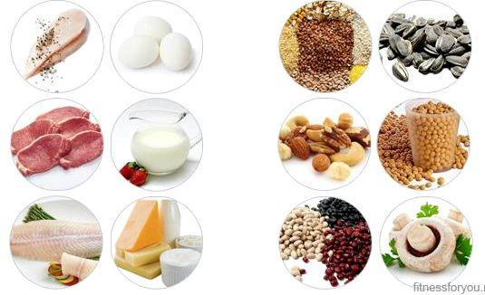 В каких продуктах есть белок могли создавать белок